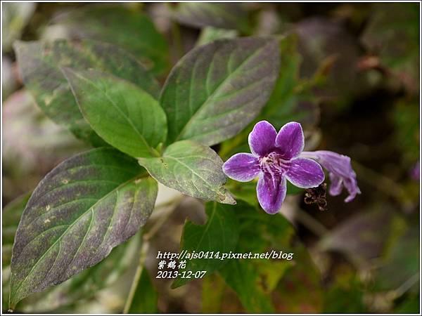 2013-12-紫鶴花3.jpg