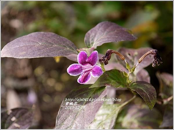 2013-12-紫鶴花4.jpg