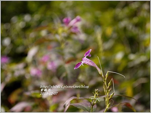 2013-12-紫鶴花8.jpg