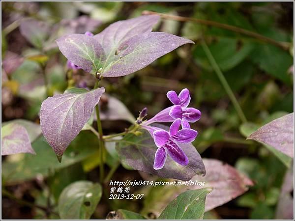 2013-12-紫鶴花10.jpg