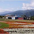2013-12-富里花海5.jpg