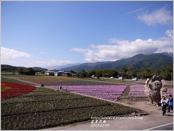 2013-12-富里花海8.jpg