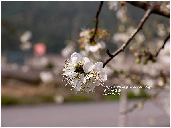 2014-冬日梅花香1.jpg
