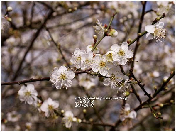 2014-冬日梅花香4.jpg
