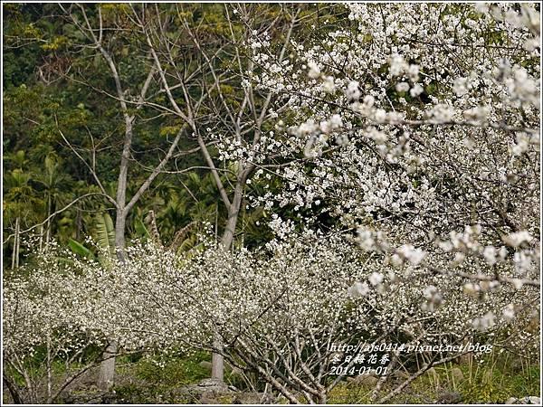 2014-冬日梅花香19.jpg