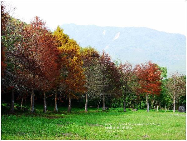 2014-01-小公園落羽松之美2.jpg