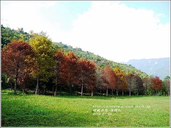 2014-01-小公園落羽松之美1.jpg