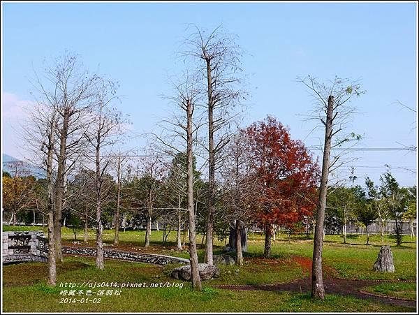 2014-01-小公園落羽松之美3.jpg