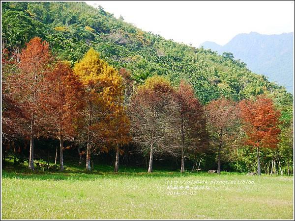 2014-01-小公園落羽松之美4.jpg