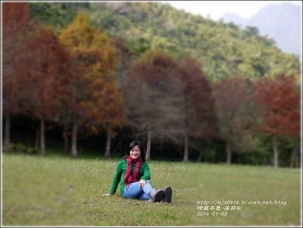 2014-01-小公園落羽松之美7.jpg