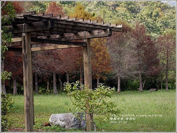 2014-01-小公園落羽松之美8.jpg