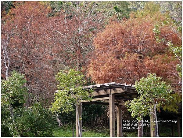 2014-01-小公園落羽松之美9.jpg