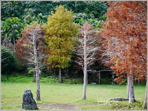 2014-01-小公園落羽松之美11.jpg