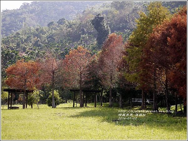 2014-01-小公園落羽松之美14.jpg