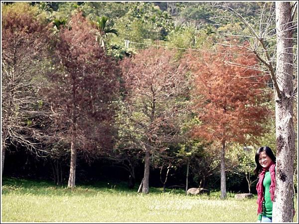2014-01-小公園落羽松之美17.jpg