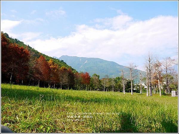 2014-01-小公園落羽松之美19.jpg