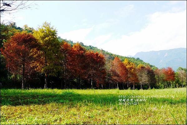 2014-01-小公園落羽松之美20.jpg