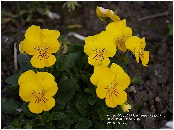 2014-01-大花利事(光復花海)10.jpg