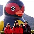 2014-01-鯉魚潭(紅面番鴨)1.jpg