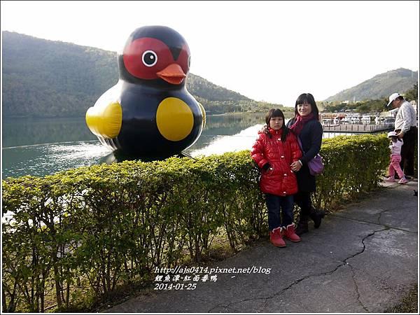 2014-01-鯉魚潭(紅面番鴨)2.jpg