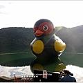 2014-01-鯉魚潭(紅面番鴨)3.jpg