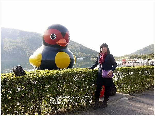 2014-01-鯉魚潭(紅面番鴨)5.jpg