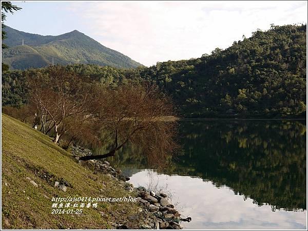 2014-01-鯉魚潭(紅面番鴨)7.jpg