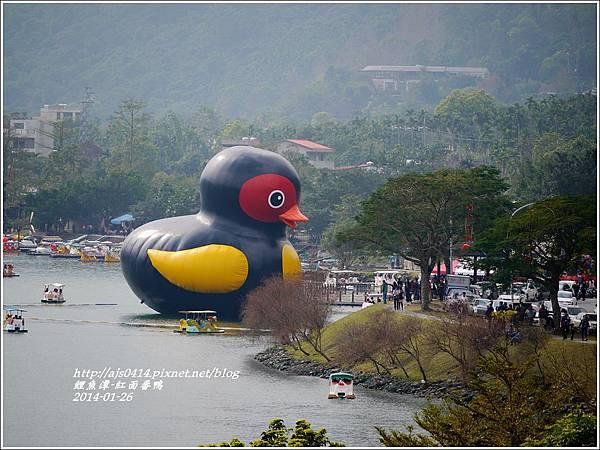 2014-01-鯉魚潭(紅面番鴨)9.jpg