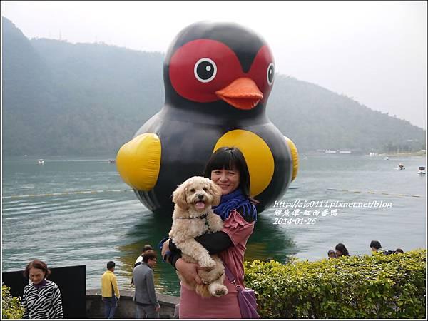 2014-01-鯉魚潭(紅面番鴨)10.jpg