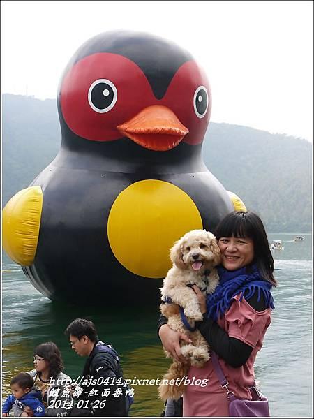 2014-01-鯉魚潭(紅面番鴨)11.jpg
