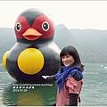 2014-01-鯉魚潭(紅面番鴨)13.jpg