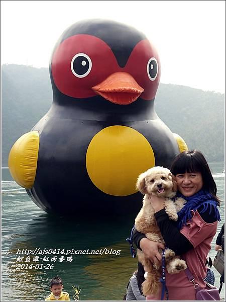 2014-01-鯉魚潭(紅面番鴨)12.jpg