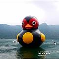 2014-01-鯉魚潭(紅面番鴨)14.jpg