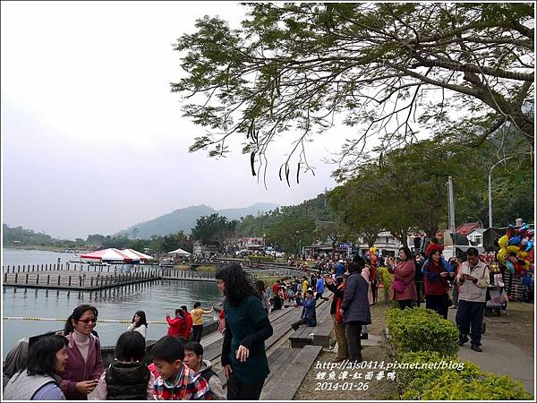 2014-01-鯉魚潭(紅面番鴨)15.jpg