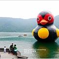 2014-01-鯉魚潭(紅面番鴨)16.jpg