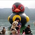 2014-01-鯉魚潭(紅面番鴨)17.jpg