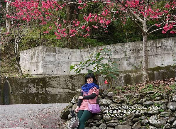 2014-01-玉山神學院春櫻1.jpg