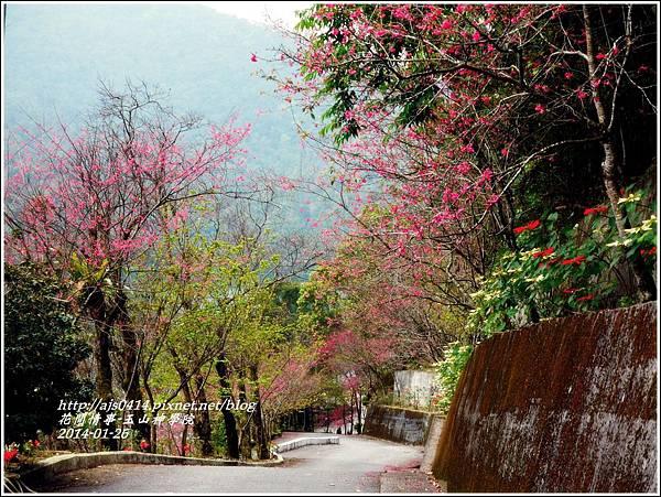 2014-01-玉山神學院春櫻8.jpg