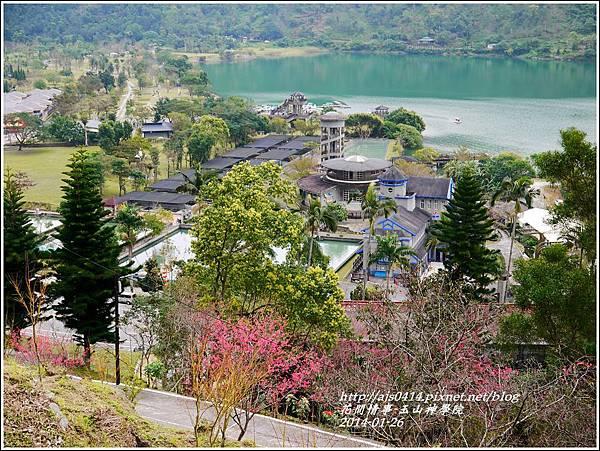 2014-01-玉山神學院春櫻11.jpg