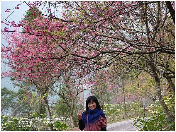 2014-01-玉山神學院春櫻21.jpg