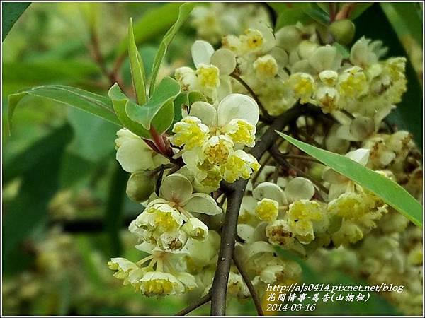 2014-03-馬告花(山胡椒)6.jpg