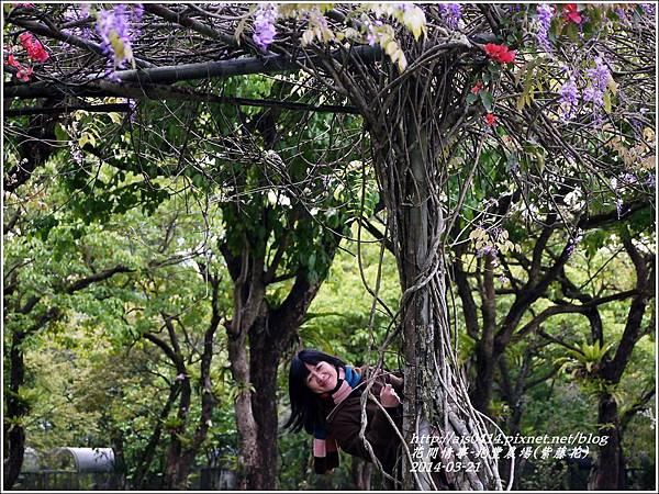 2014-03-兆豐遇紫藤花21.jpg