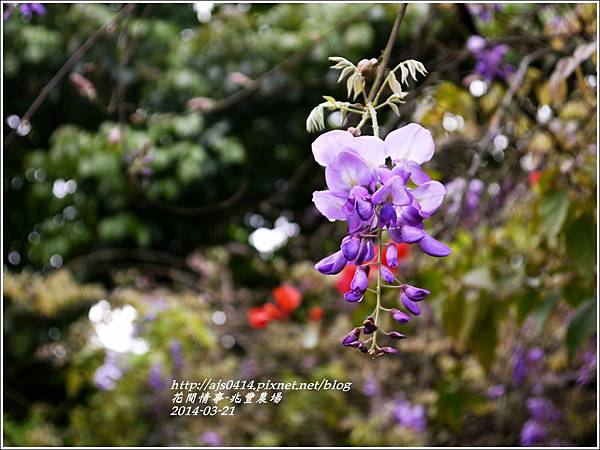 2014-03-兆豐遇紫藤花2.jpg