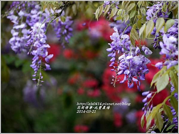 2014-03-兆豐遇紫藤花3.jpg