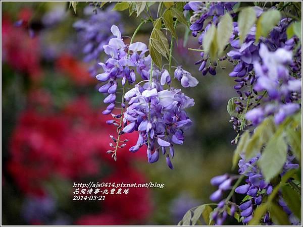 2014-03-兆豐遇紫藤花4.jpg