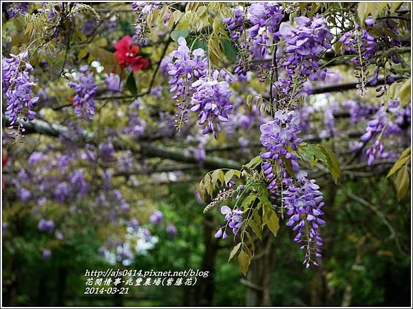 2014-03-兆豐遇紫藤花5.jpg
