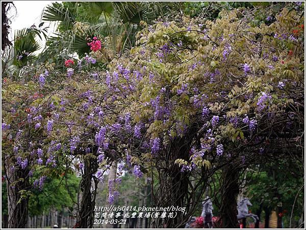 2014-03-兆豐遇紫藤花6.jpg