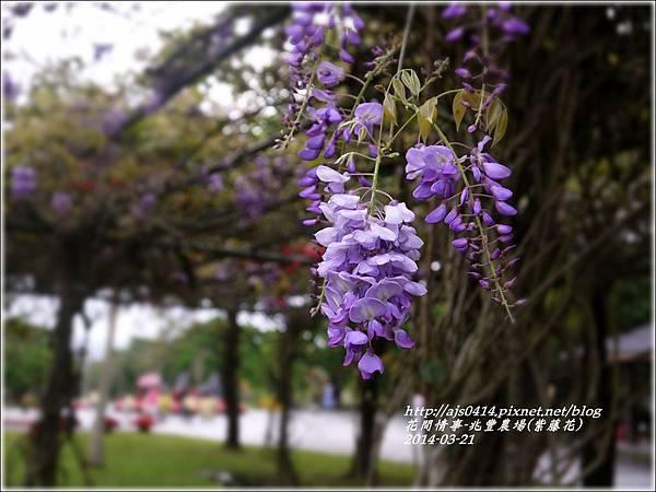 2014-03-兆豐遇紫藤花7.jpg