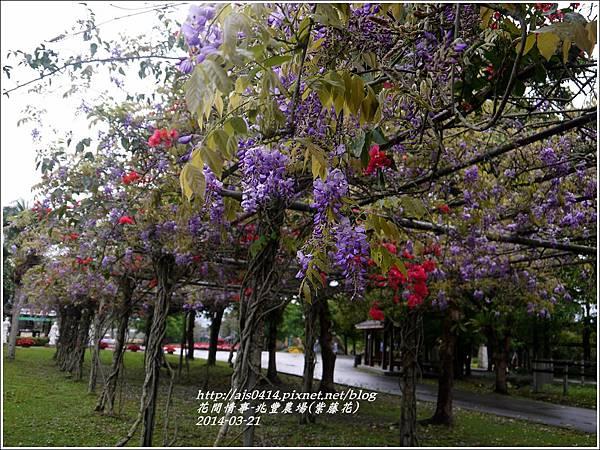 2014-03-兆豐遇紫藤花10.jpg