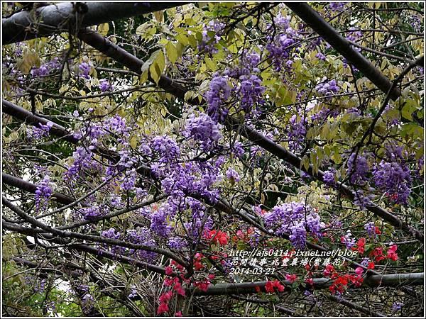 2014-03-兆豐遇紫藤花12.jpg